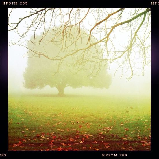 watching the fog at Greenwich Park No Flash Pistil Film Watching The Fog