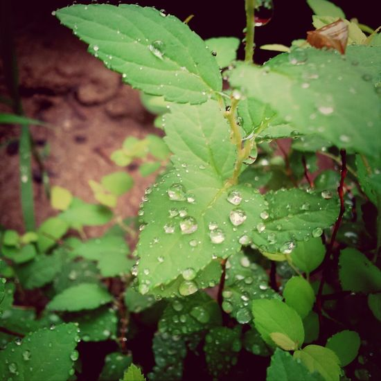 An older picture I found. Nature Landscape Raindrops Pretty