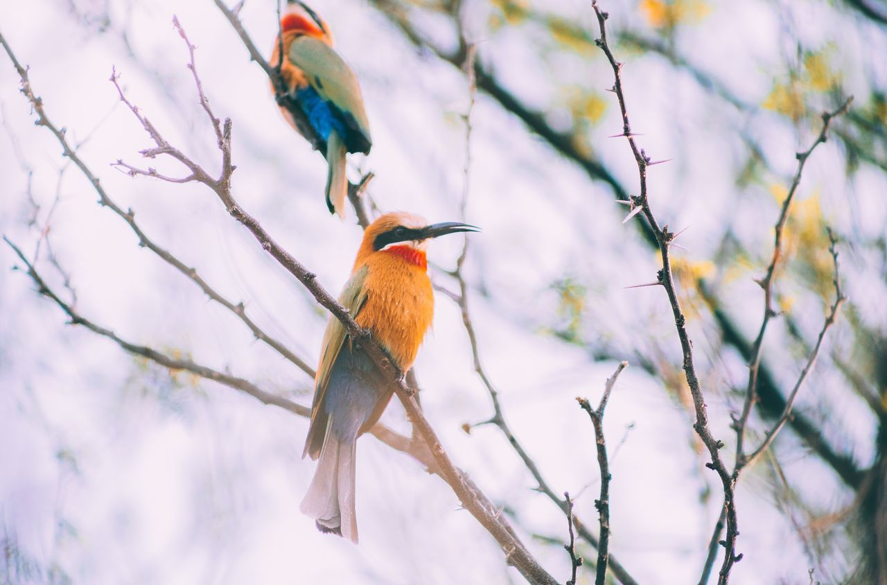 Low Angle View Of Birds Perching On Plant