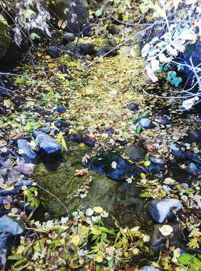 Cours D'eau Nature Water Feuilles D'automne