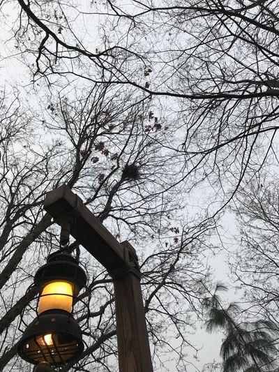 Lamp Lamp Post