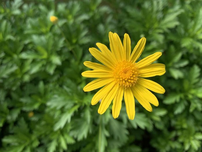 Close-up of yellow flower in field
