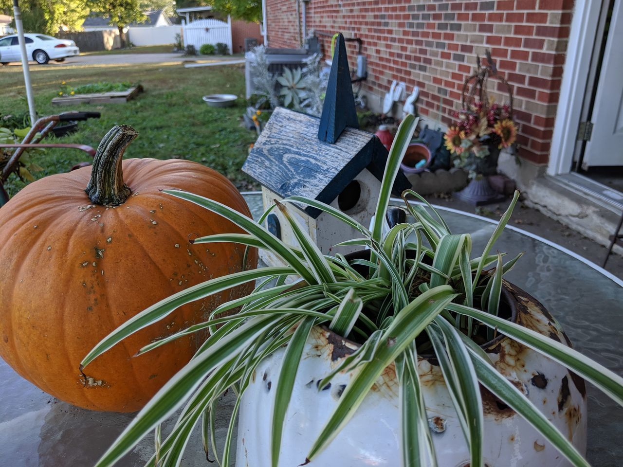 pumpkin, food and drink, plant, food, day, high angle view, no people, freshness, close-up, growth, nature, vegetable, decoration, container, plant part, outdoors, architecture, green color, leaf, healthy eating