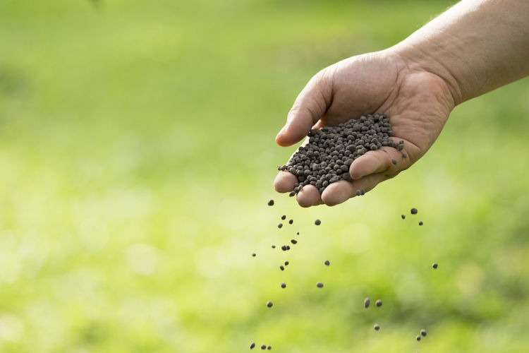 Man's hand is sowing fertilizer. Important steps to take care of plants. Close-up Day Human Body Part Human Hand Nature One Person Outdoors People Real People