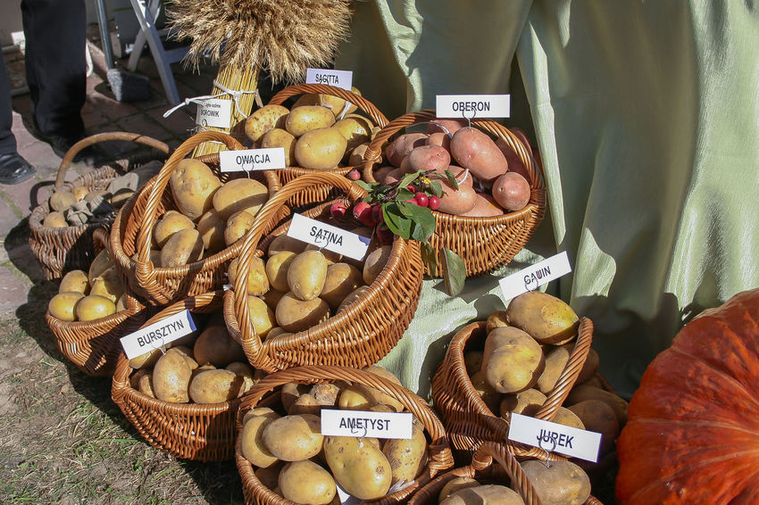 Kazimierz Dolny Autumn KAZIMIERZ DOLNY Kazimierz Dolny Nad Wisłą Kazimierz Nad Wisłą Poland Basket Choice Festival Folklore Food Food And Drink For Sale Freshness Healthy Eating Large Group Of Objects Market Market Stall Outdoors Potatoes Retail  Variation Vegetables Wellbeing