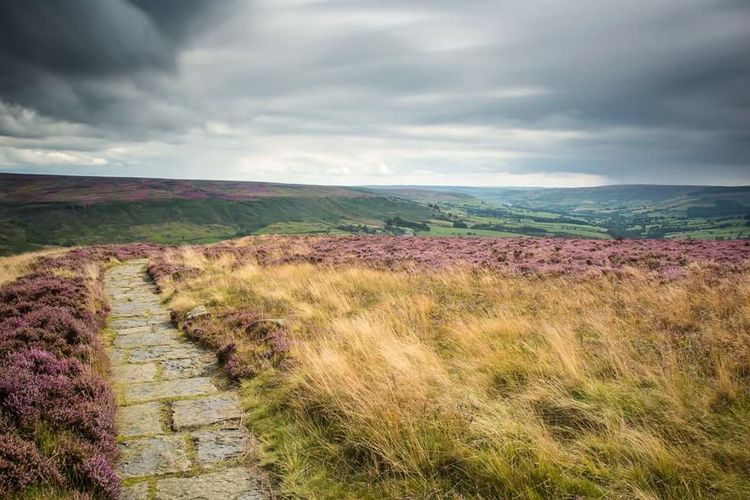 First Eyeem Photo Heather Clay Bank North Yorkshire Moors Landscape Longexposurephotography Tranquility Outdoors No People Long Exposure North Yorkshire Landscape_photography Landscape_Collection Longexposure