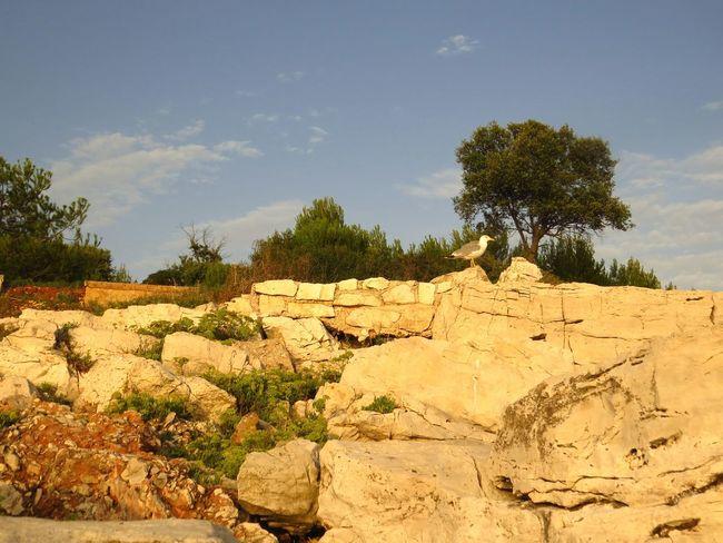 The KIOMI Collection Croatia Crveniotok Istria Rovinj Rovinjcroatia Rovinj2016 Rovigno Rock Sunset Mediterraneansea Colorfullcroatia Kroatien Shareistria Croatia_photography