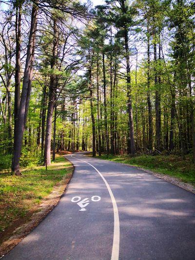 Bikepath Tree