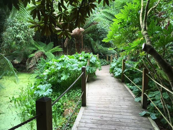 Lost Gardens Of Heligan Plant Growth Green Color Nature No People Day Lush Foliage Footpath Tranquility