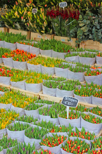 Tulips for sale. Flower Plant Tulips Tulips🌷 Bloemenmarkt Amsterdam Amsterdam City