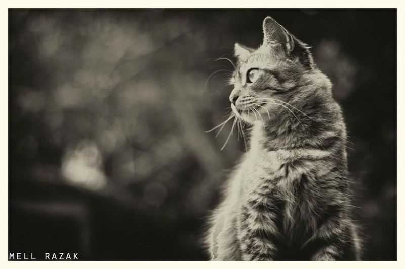 John (r.i.p) Restinpeace Cats Of EyeEm Cat Lovers Cat Cats 🐱 Cat♡ Cats Vscoborneo Vscomalaya Vscocam VscomalaysianVSCO Vscomalaysia Vscosingapore Vscoturkey Vscoperak Kucing KucingLover Blackandwhite Black And White Photography Black And White Blackandwhitephotography Cat Photography Black And White Collection  Black And White Portrait
