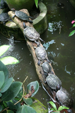 Why do they do that? Turtles High Angle View Water No People Turtle