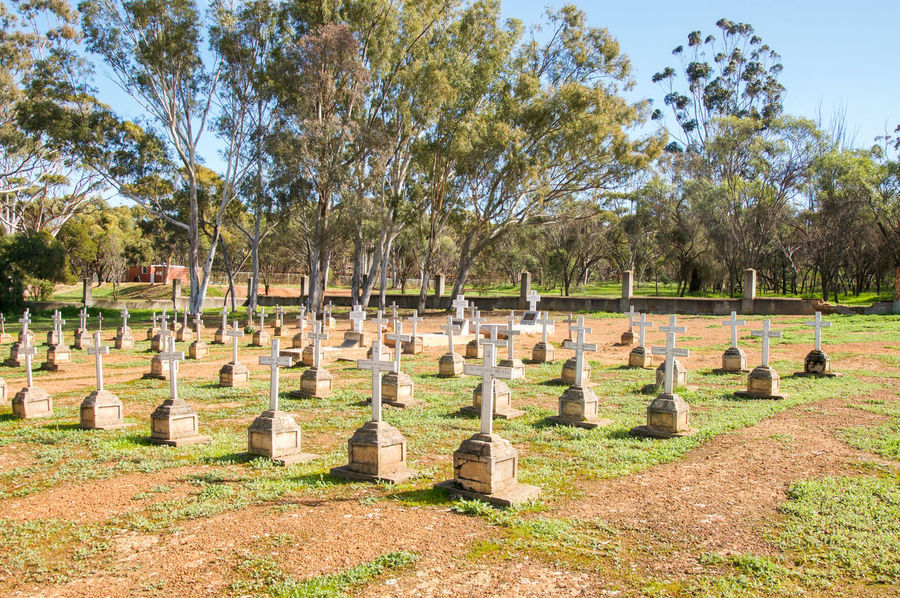 Organised rows of tombstones with crosses at the New Norcia Cemetery in New Norcia, Western Australia. Australia Burial Ground Cemetery Cross Crosses Eucalyptus Gravestones Graveyard Headstones Landscape Markers  New Norcia Organized Peaceful Religious  Rememberance Rest In Peace Resting Place Rows Of Things Spiritual Tombstones Tranquility Trees Western White