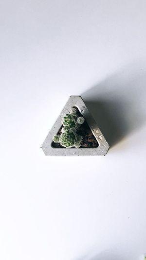 Kaktüs Plant Cactus Copy Space No People Nature Shape Architecture Day Indoors