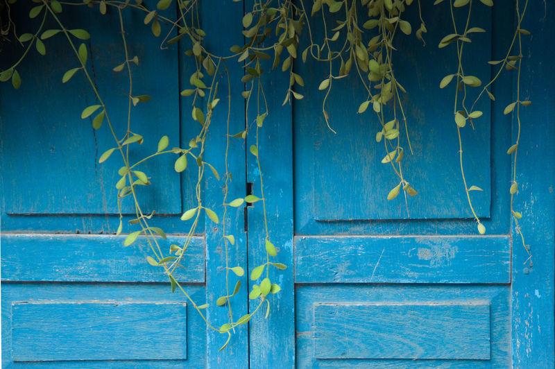 Full frame shot of closed wooden doors