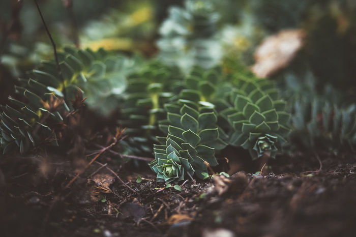Extraordinary  Leafs Beauty In Nature Fragility Freshness Green Color Ground Ground Level View Growth Leaf Nature No People Plant Selective Focus Soil Strange