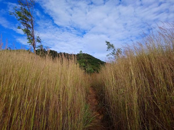 A trail Hiking Nature Grassy Sky Beauty In Nature Adventure Outdoors Nopeople Mountaineering