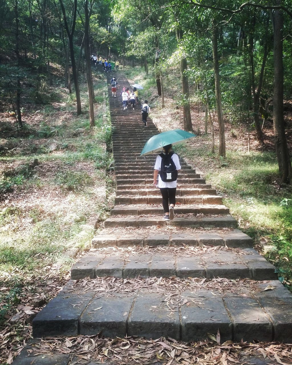 steps, steps and staircases, real people, lifestyles, staircase, walking, full length, tree, the way forward, nature, day, leisure activity, one person, outdoors, motion, growth, forest, men, women, mammal, people