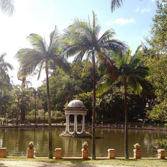 Hidden Gems  Park Sculpture Lake Palm Trees