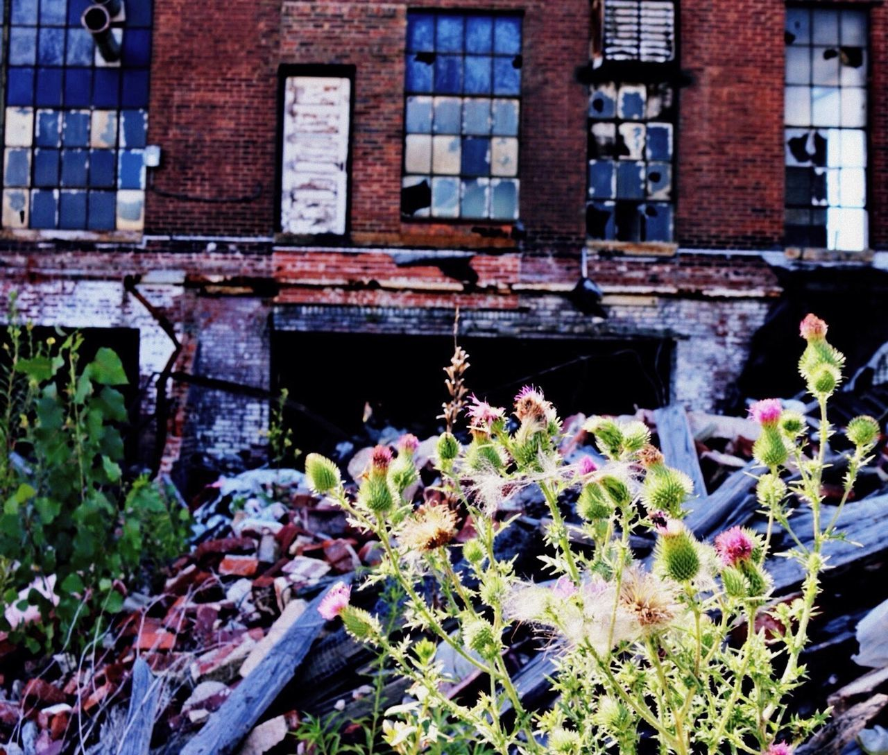 architecture, building exterior, built structure, plant, window, day, flower, outdoors, no people, growth, nature, fragility, close-up, window box