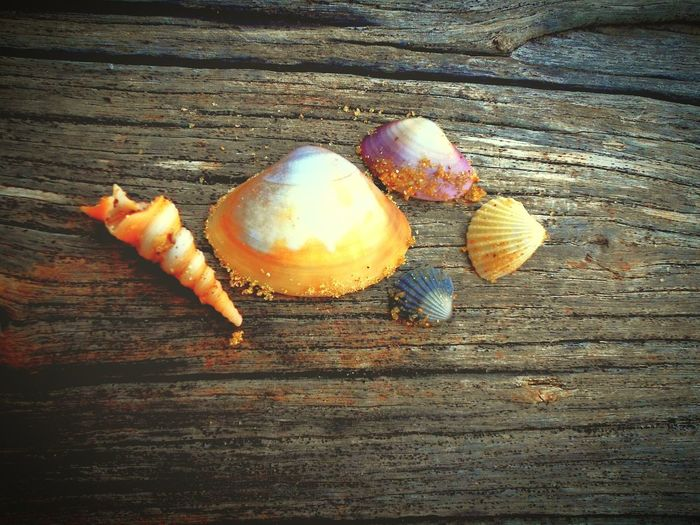 Amazing Clicks!!!!! Shells Bestoftheday Arrangement Beach Wood Wallpaper Shell Magzine Cover Magzine Beauty In Nature Cool Effects  Life Is A Beach Best EyeEm Shot Best Seller Bestclickever Beautiful View Wallpaper Wood Beautiful Shells Shell Friends Popular Showcase April EyeEm Getty Collection What I Value Getty Images Fresh On Eyeem  Colour Of Life Be. Ready. The Still Life Photographer - 2018 EyeEm Awards