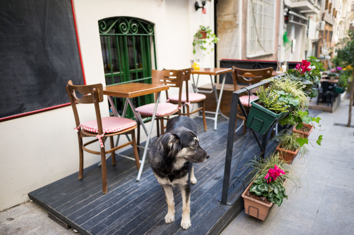 Stray Dog earning his bone working as a waiter in Beyoglu Animal Themes Beyoğlu Bokeh Cafe Chair Cute Day Dog Domestic Animals Flower Focus On Foreground Mammal My Year My View No People One Animal Outdoors Pets Restaurant Stray Dog Street Streetphotography Table Tourism Tourist Waiter