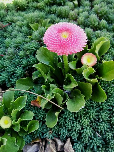 Green Pink Pink Flower Flower Nature Natural Natural Beauty Taking Photos Photography Relaxing
