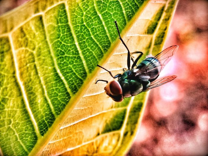 Animal Animal Wildlife Animal Wing Close-up Day Focus On Foreground Green Color Insect Leaf Leaf Vein Nature No People Outdoors Selective Focus
