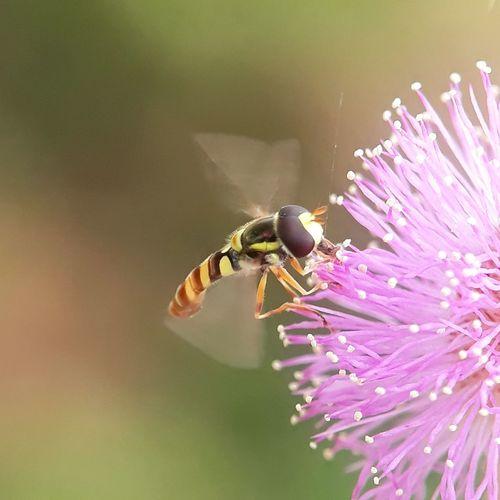 flying bee Bee