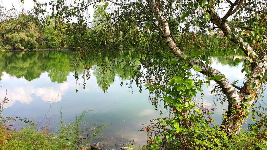 Betula Betulla Lake View Lakeside Beauty In Nature Beautiful Nature Nature_collection Nature Photography Naturelovers Natural Beauty Water Tree Lake Leaf Underwater Floating On Water Reflection Standing Water Flood Sky Water Plant Algae Reflection Lake