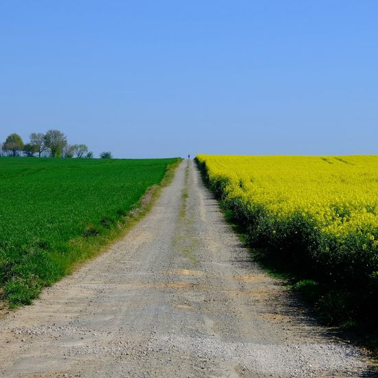 Road amidst field against clear sky