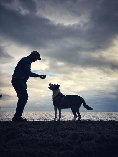 Pets Cloud -