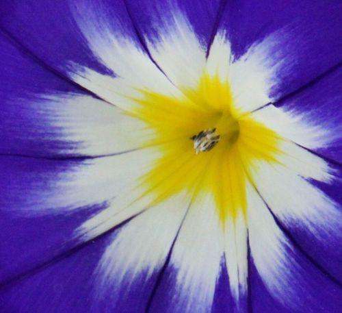 Flower Head Yellow Star Beauty In Nature Blooming Blue Close-up Extreme Close-up Flower Flower Head Macro Nature Petal Pollen Purple Stamen Beauty In Nature Blooming Blue Close-up Extreme Close-up Flower Flower Head Macro Nature Petal Pollen Purple Stamen