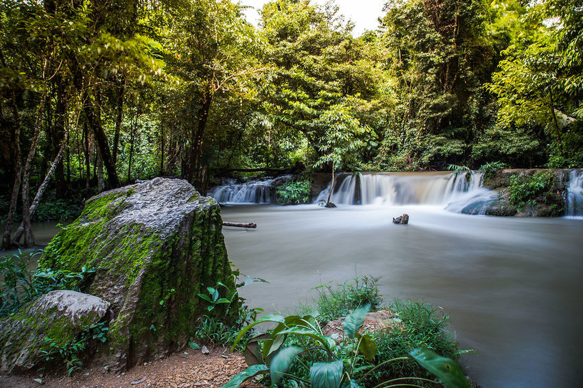 Tree Water Waterfall Forest Motion Sky Plant Flowing Flowing Water Falling Water Fountain