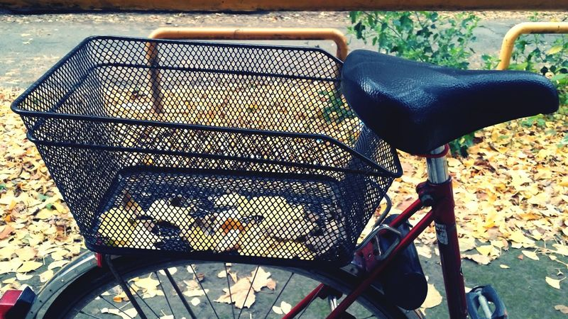 Stowaway Bike Love Yellow Leaves Outdoors Day No People Beautifully Organized Beautiful Nature EyeEm Best Shots EyeEm Nature Lover Red Bike Bike Basket Bycicle Way Of Transport Collection Adapted To The City Lieblingsteil
