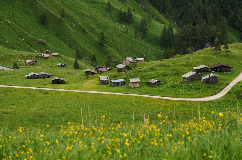 Panorama at Passo Fedaia, Val di Fassa, Dolomites, Italy. Dolomiti Italy Passo Fedaia Alpine Landscape Alps Beauty In Nature Day Environment Fassade Fedaia Field Flowers Grass Green Color Land Landscape Nature No People South Tyrol, Italy Yellow