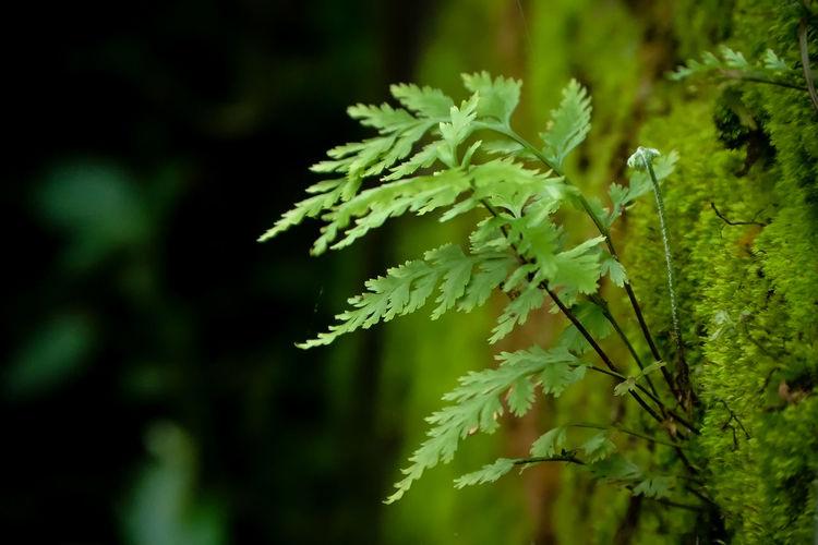 Wild plant Leaf
