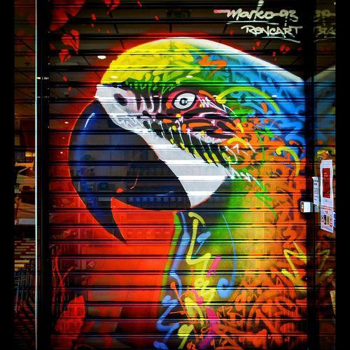 Marko93 Painting Graffiti Art Streetart Graffiti Calligraphy Art Perroquet Parrot Bird Art, Drawing, Creativity Streetphotography Calligraffiti