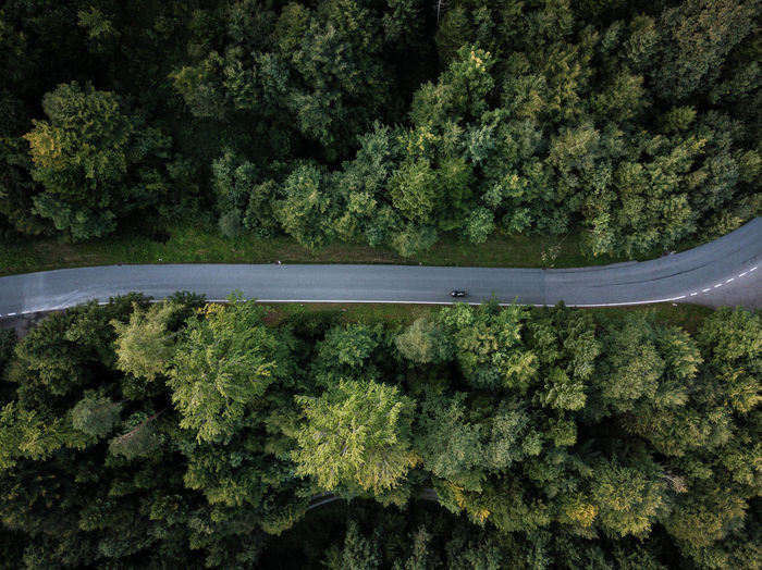 Plant Tree Green Color Nature Forest No People Growth Day Beauty In Nature Land Transportation Scenics - Nature Outdoors Foliage Tranquility Mode Of Transportation High Angle View Lush Foliage Non-urban Scene Tranquil Scene
