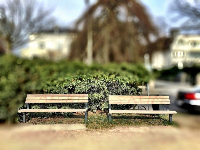AllahSatan Anti Religion Plant Bench Nature Seat No People Park Day Focus On Foreground