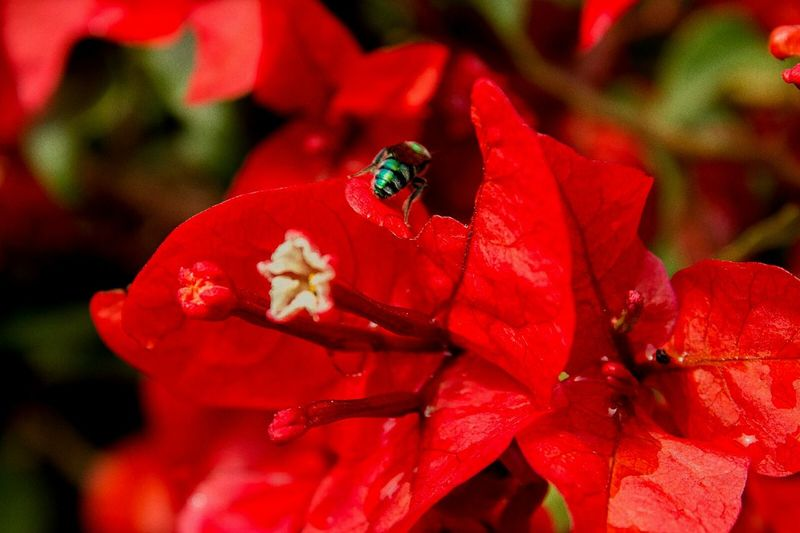 Red Flower Insect Nature