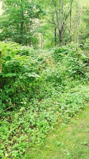 Swedish Jungle