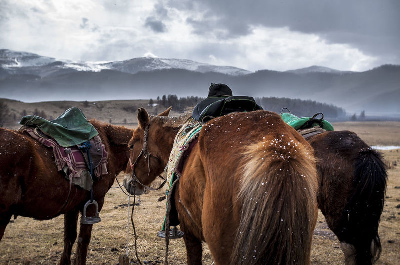 Horses On Field Against Mountains During Winter