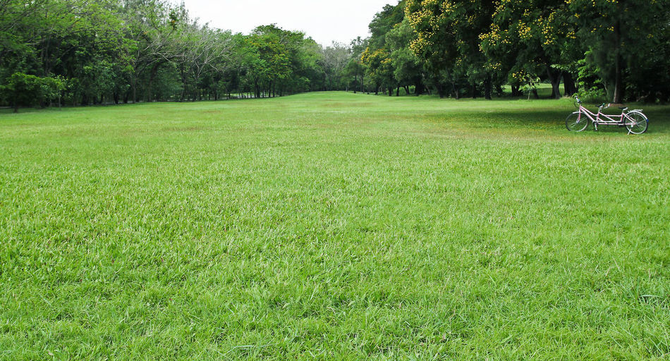 Scenic view of grassy field in park