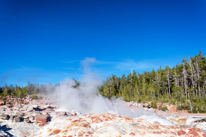 View of Steamboat Geyser in Yellowstone National Park LifeLess National Park Natural Nature Scenic Terrace Travel Tree Trees Wyoming Yellowstone Yellowstone National Park Barren Calcium Dead Geothermal  Landscape Limestone Mammoth Mammothhotsprings Mineral Park Spring Springs Wilderness