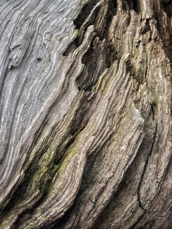 Patterns In Nature Surfaces And Textures Driftwood Scenery Full Frame Textured  Backgrounds Pattern No People Rough Close-up Nature Tree Tree Trunk Natural Pattern Trunk Wood - Material Outdoors Day Bark Plant Bark Plant