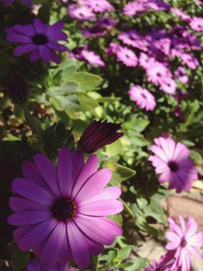 Flor que da fulgor First Eyeem Photo