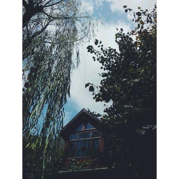 Blue Sky Greentree Window Perfectday ???☁