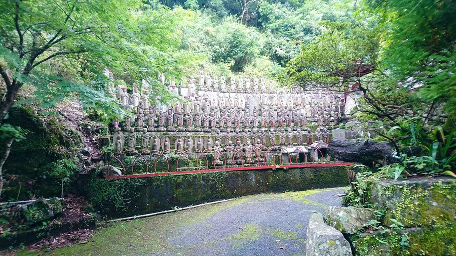 Day Outdoors No People Tree Plant History Jizo Jizou Japanese Culture