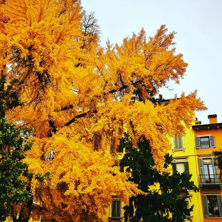 Tree Building Exterior Built Structure No People Growth Outdoors Nature Architecture Autumn Day City Cityscape Sky Close-up yellow autumn